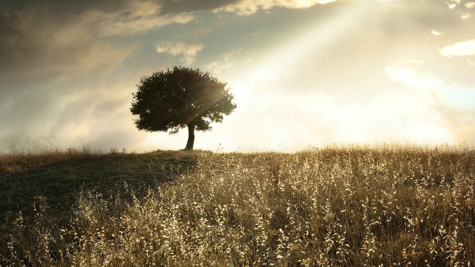 Does Christianity Make Life Harder?   Desiring God